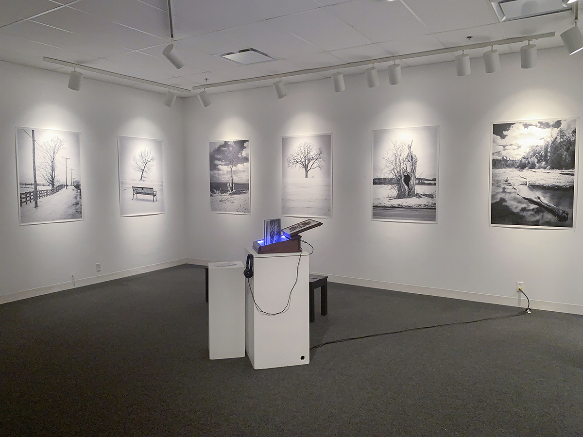 Several large black and white printed photographs of trees are shown on a gallery wall. In the centre a box rests on a plinth and emits a blue light, within the open box is a photo book Titled Trees