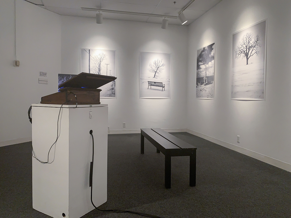 large black and white images of trees hang on white gallery walls, on a plinth in the centre rests a box, glowing blue, that contains a photo book titiled trees