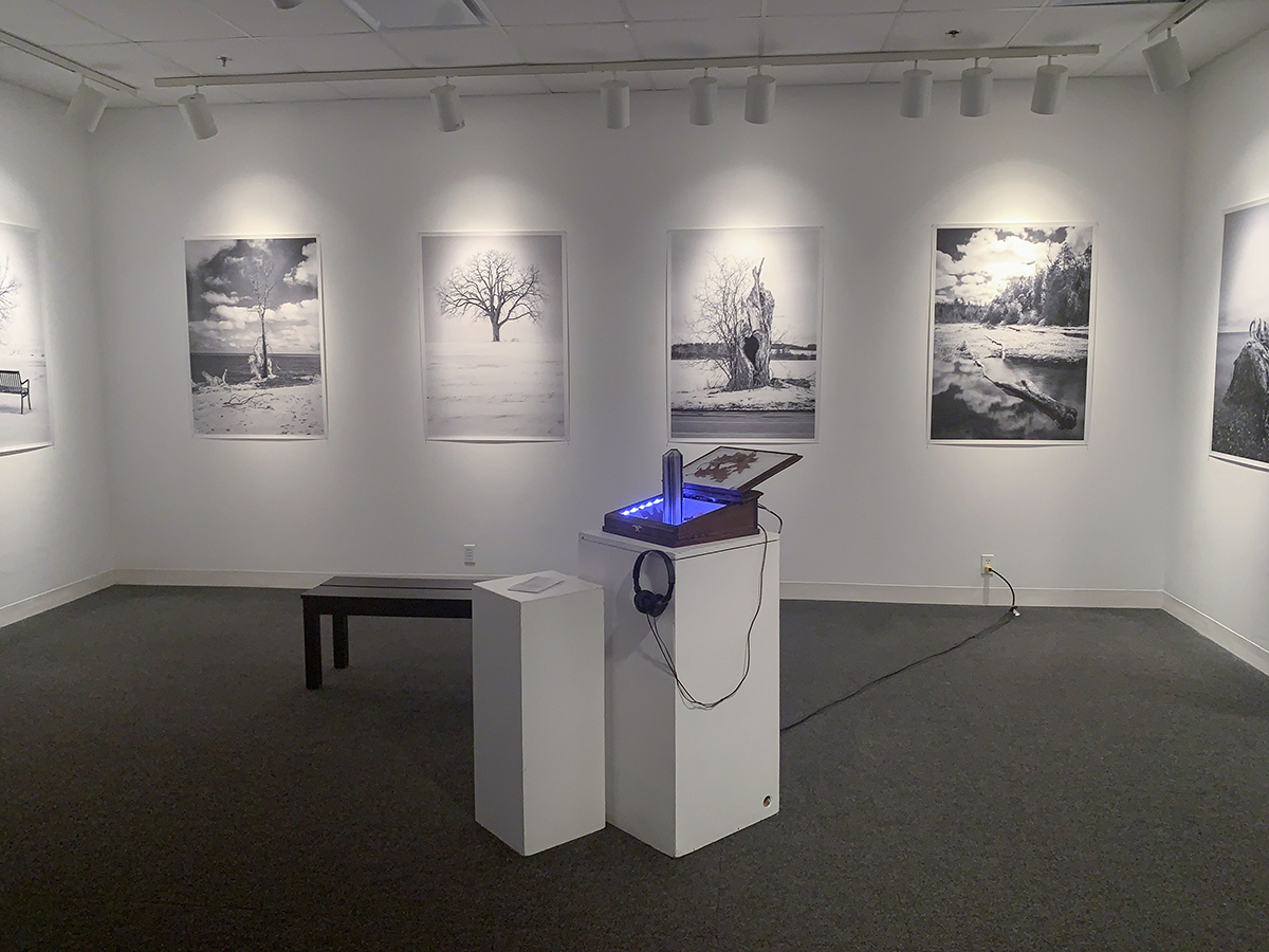 Large black and white photographs of a variety of trees hand on a gallery wall, in the centre a book rests on a plinth, along with a pair of headphones attatched to a wooden box